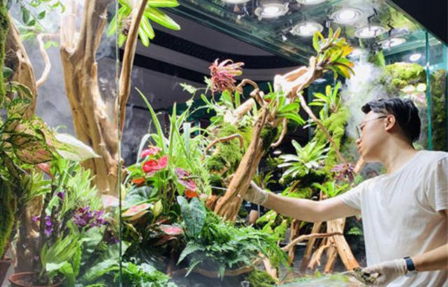 定制雨林缸